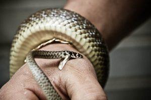 Sognare il serpente che morde la mano