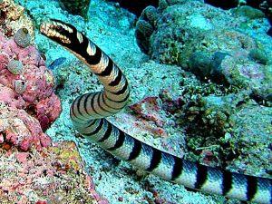 Serpente acquatico