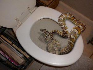 serpente nel water