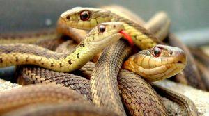 sognare serpenti