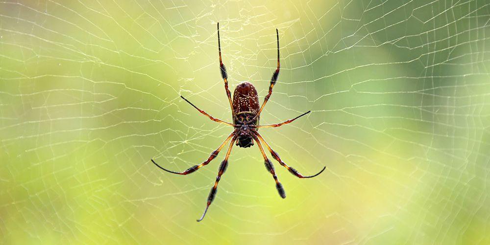 sognare un ragno